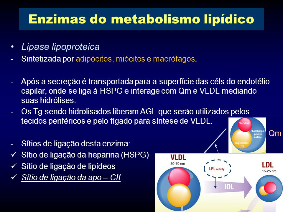Enzimas do metabolismo lipídico