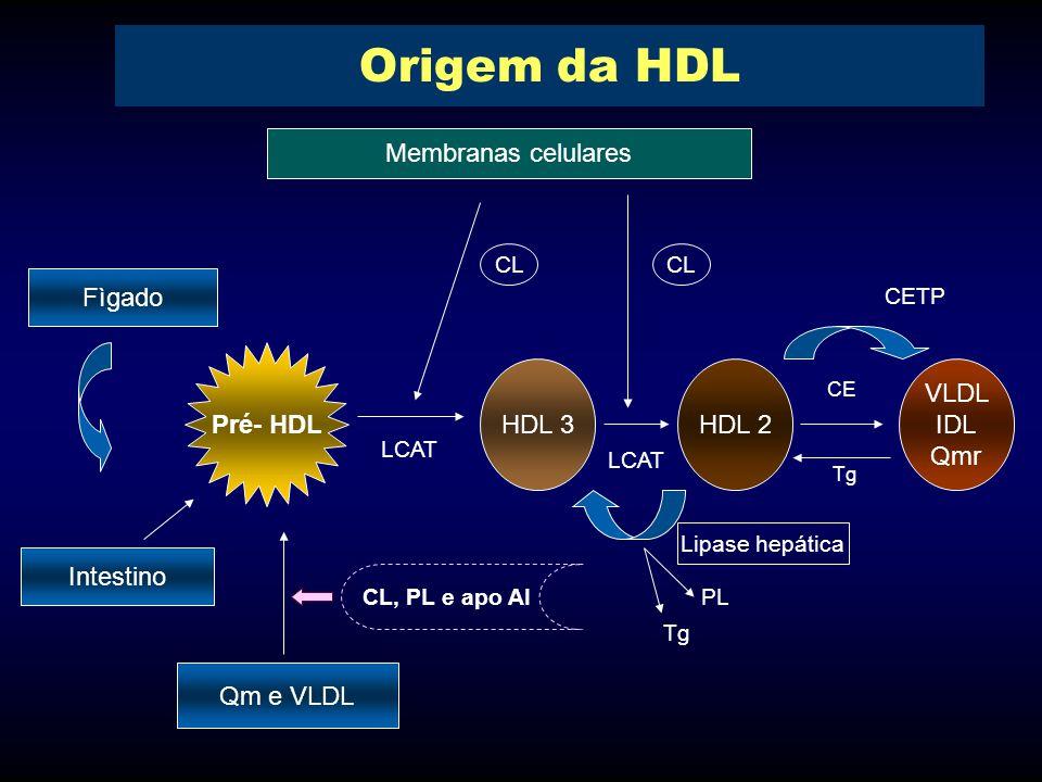 Origem da HDL Membranas celulares Fìgado Pré- HDL HDL 3 HDL 2 VLDL IDL