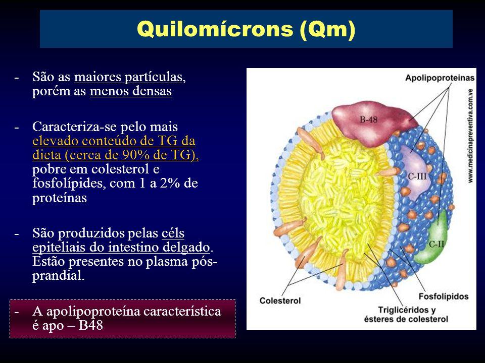 Quilomícrons (Qm) São as maiores partículas, porém as menos densas