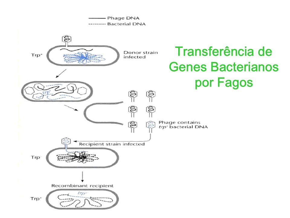 Transferência de Genes Bacterianos por Fagos