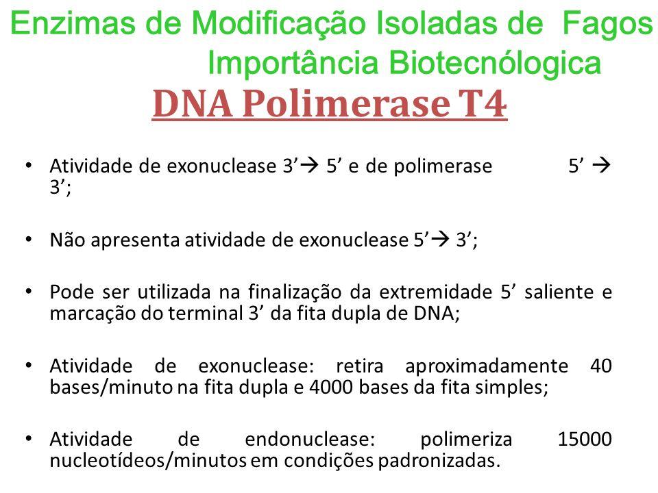 Enzimas de Modificação Isoladas de Fagos Importância Biotecnólogica