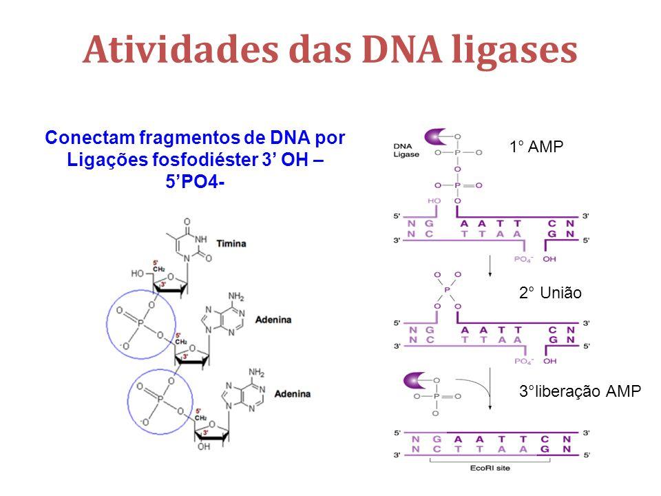 Atividades das DNA ligases