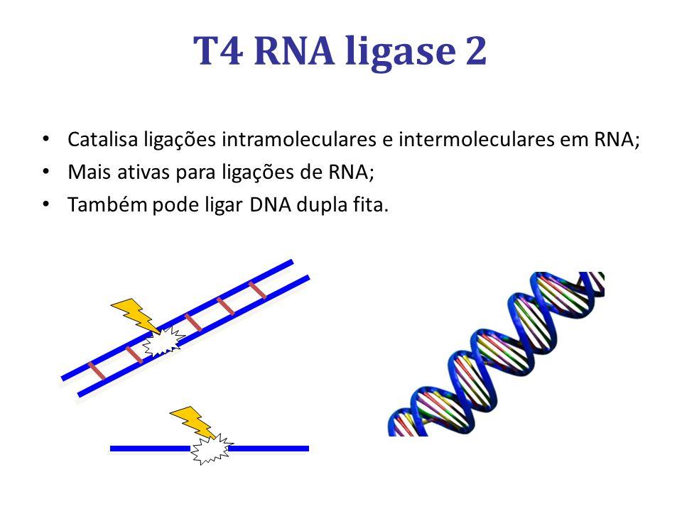T4 RNA ligase 2 Catalisa ligações intramoleculares e intermoleculares em RNA; Mais ativas para ligações de RNA;