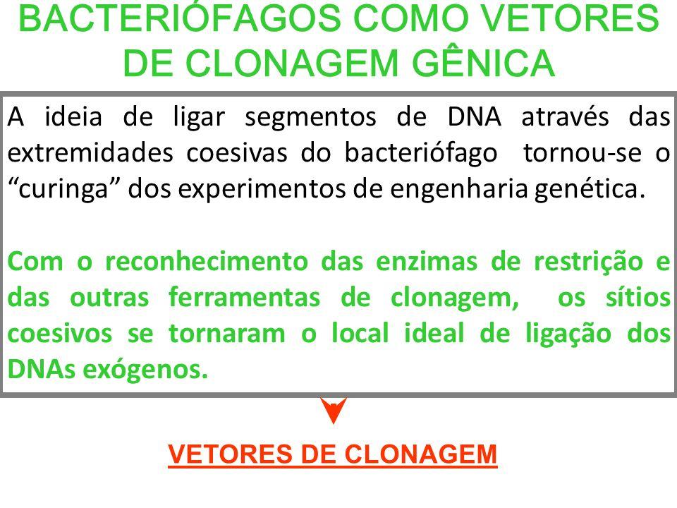 BACTERIÓFAGOS COMO VETORES DE CLONAGEM GÊNICA