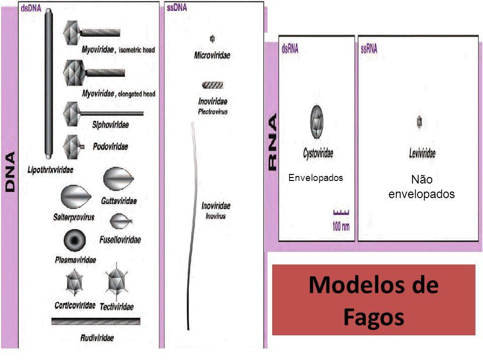 Envelopados Não envelopados Modelos de Fagos