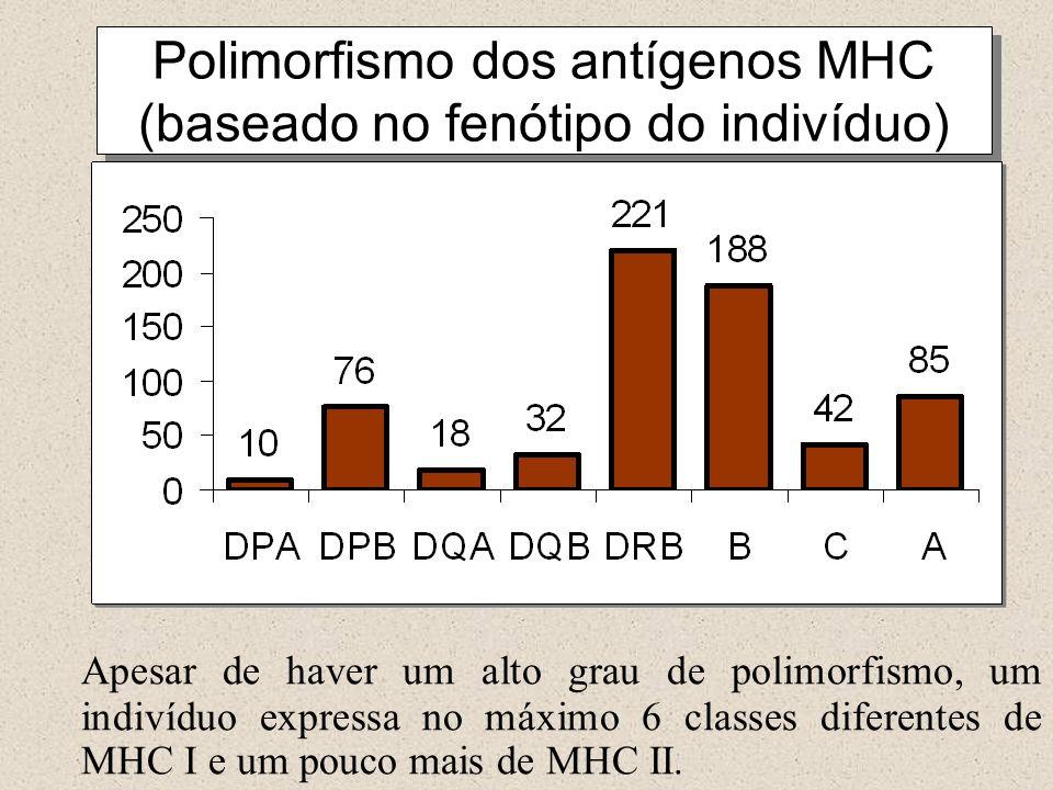 Polimorfismo dos antígenos MHC (baseado no fenótipo do indivíduo)