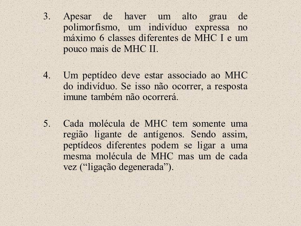 Apesar de haver um alto grau de polimorfismo, um indivíduo expressa no máximo 6 classes diferentes de MHC I e um pouco mais de MHC II.