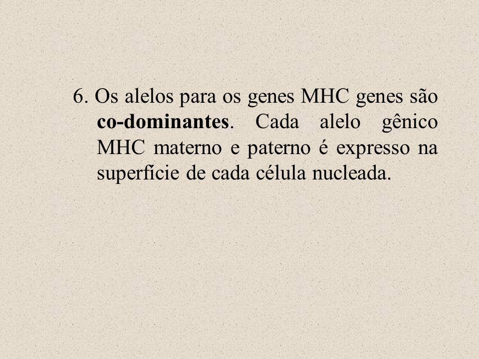 6. Os alelos para os genes MHC genes são co-dominantes