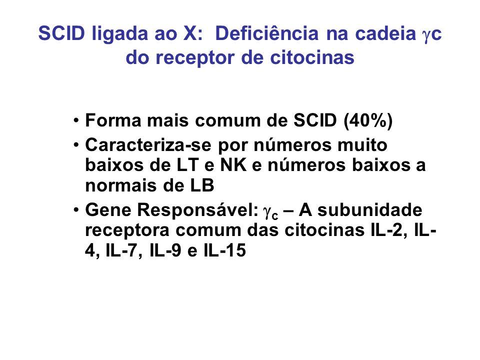 SCID ligada ao X: Deficiência na cadeia gc do receptor de citocinas