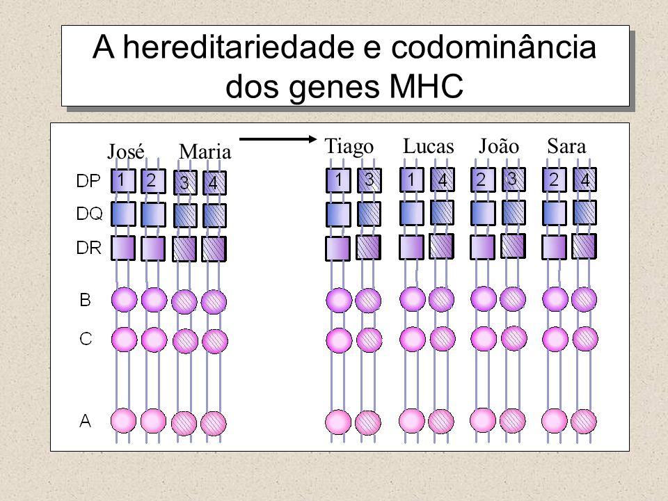 A hereditariedade e codominância dos genes MHC