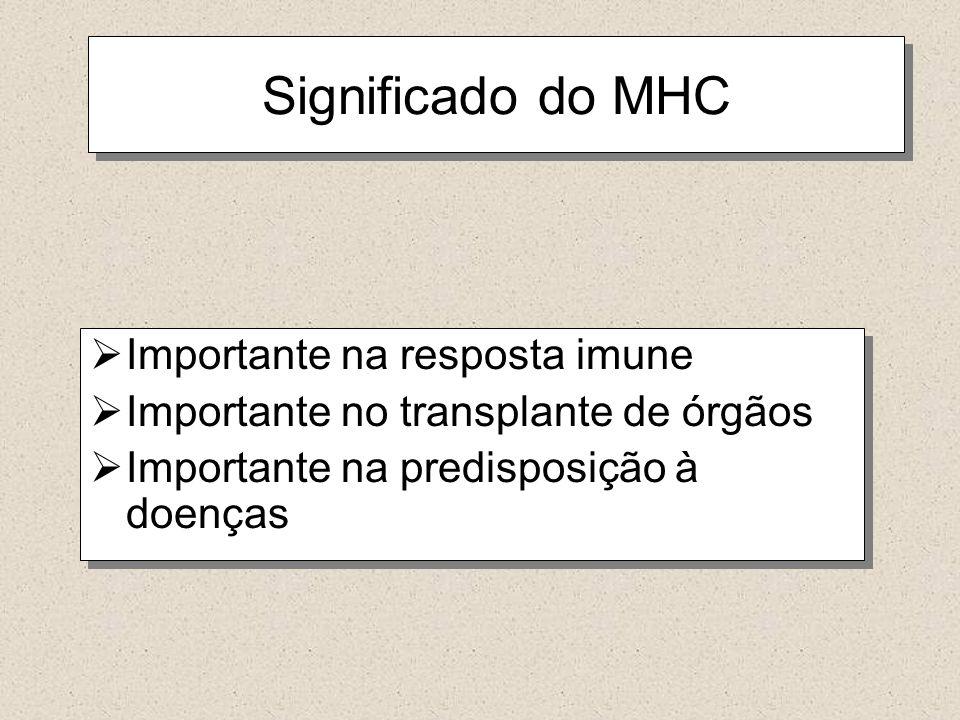 Significado do MHC Importante na resposta imune