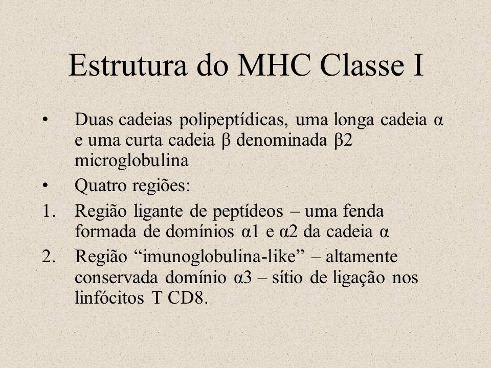 Estrutura do MHC Classe I