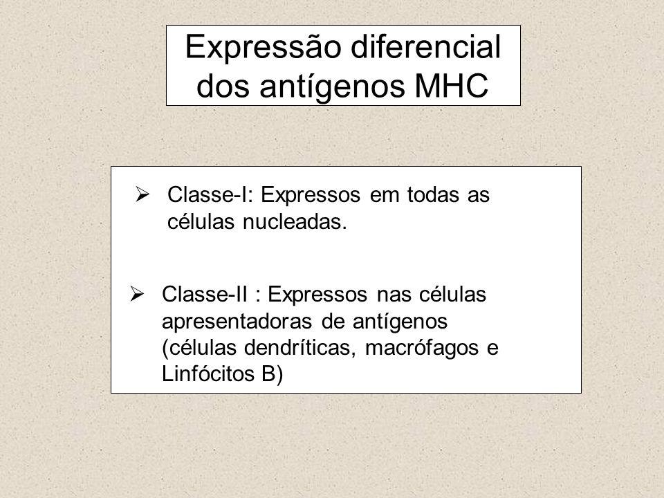 Expressão diferencial dos antígenos MHC