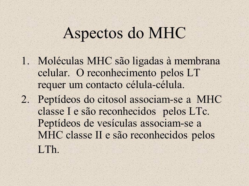 Aspectos do MHCMoléculas MHC são ligadas à membrana celular. O reconhecimento pelos LT requer um contacto célula-célula.