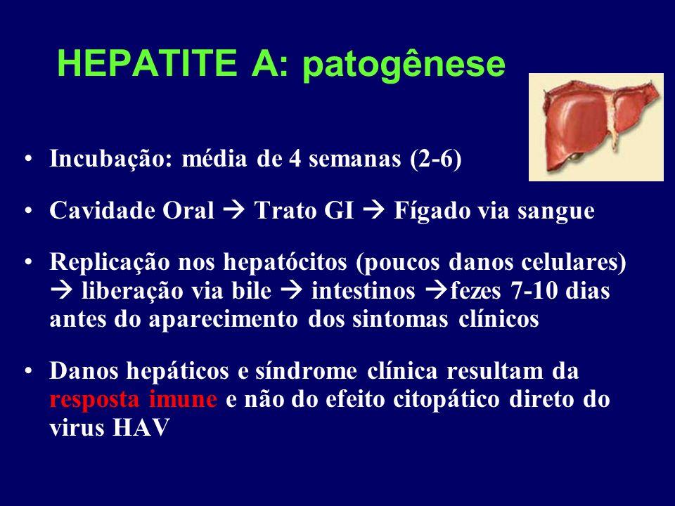 HEPATITE A: patogênese