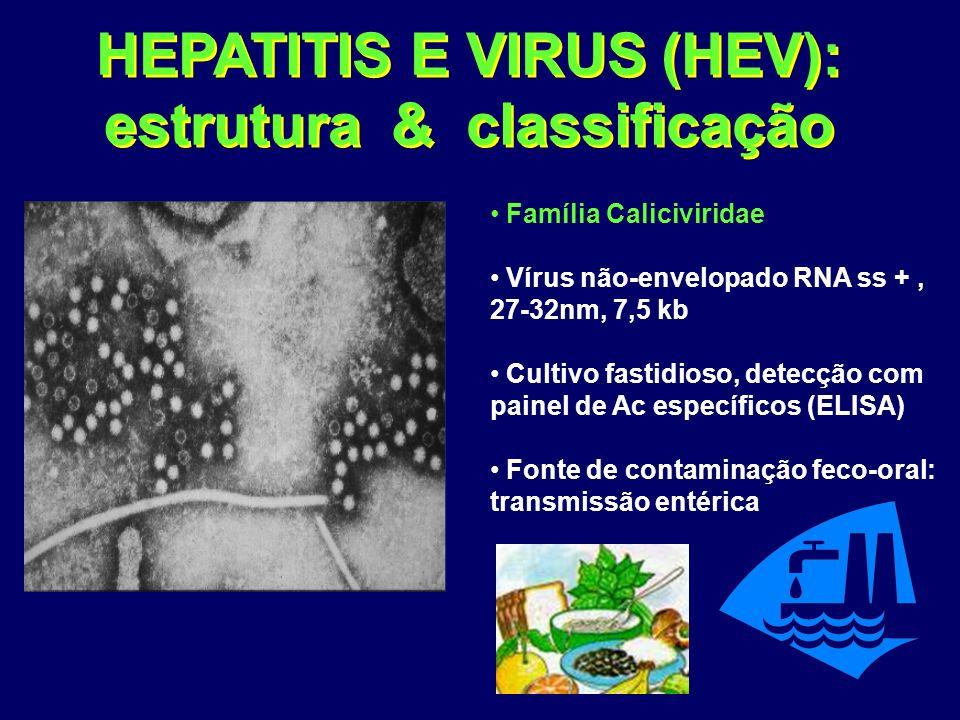 HEPATITIS E VIRUS (HEV): estrutura & classificação