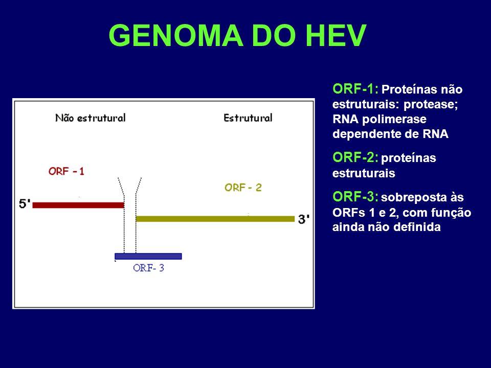 GENOMA DO HEV ORF-1: Proteínas não estruturais: protease; RNA polimerase dependente de RNA. ORF-2: proteínas estruturais.