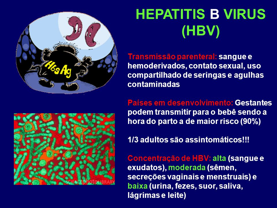 HEPATITIS B VIRUS (HBV)