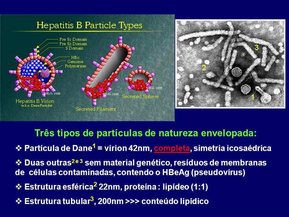 Três tipos de partículas de natureza envelopada: