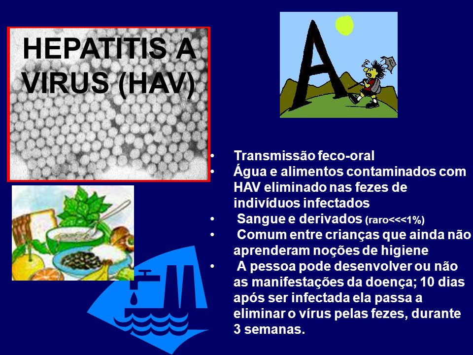 HEPATITIS A VIRUS (HAV)