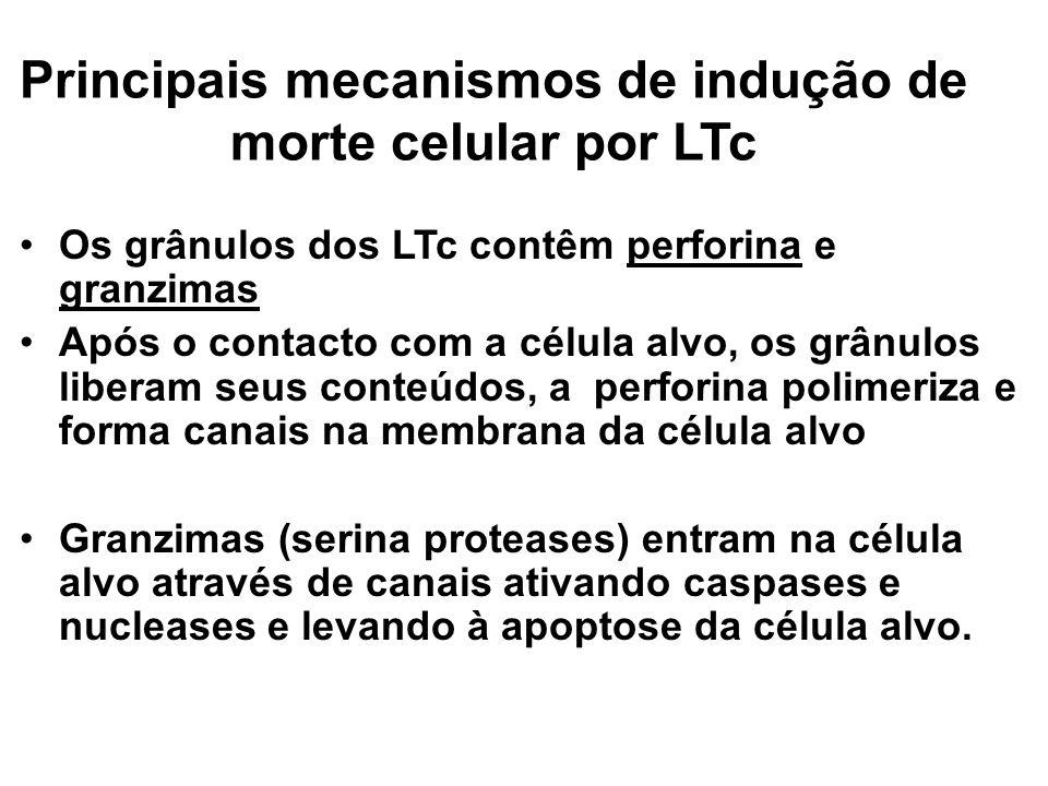 Principais mecanismos de indução de morte celular por LTc