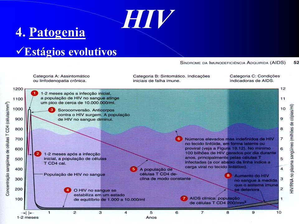 HIV 4. Patogenia Estágios evolutivos