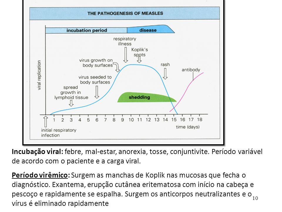 Incubação viral: febre, mal-estar, anorexia, tosse, conjuntivite