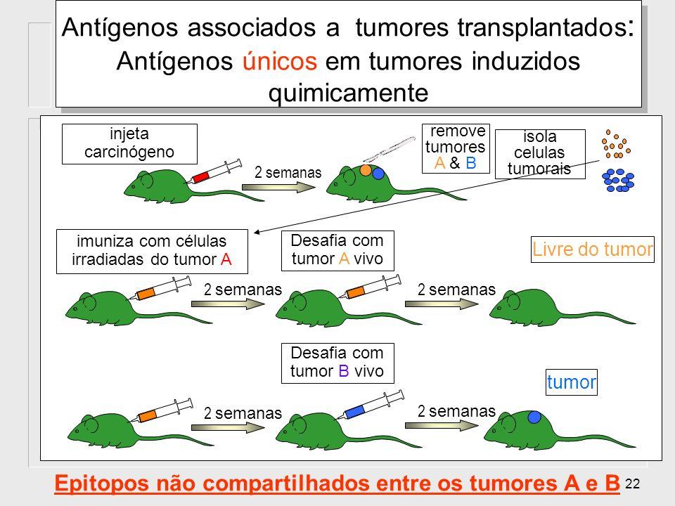 Epitopos não compartilhados entre os tumores A e B