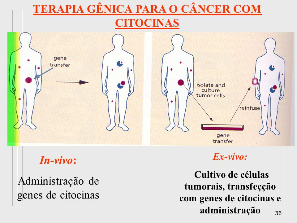 TERAPIA GÊNICA PARA O CÂNCER COM CITOCINAS