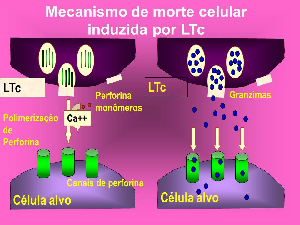 Mecanismo de morte celular induzida por LTc