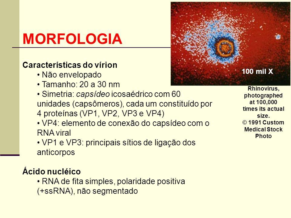 MORFOLOGIA Características do vírion Não envelopado