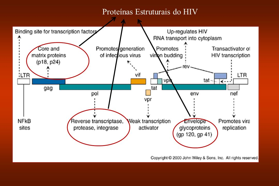 Proteínas Estruturais do HIV