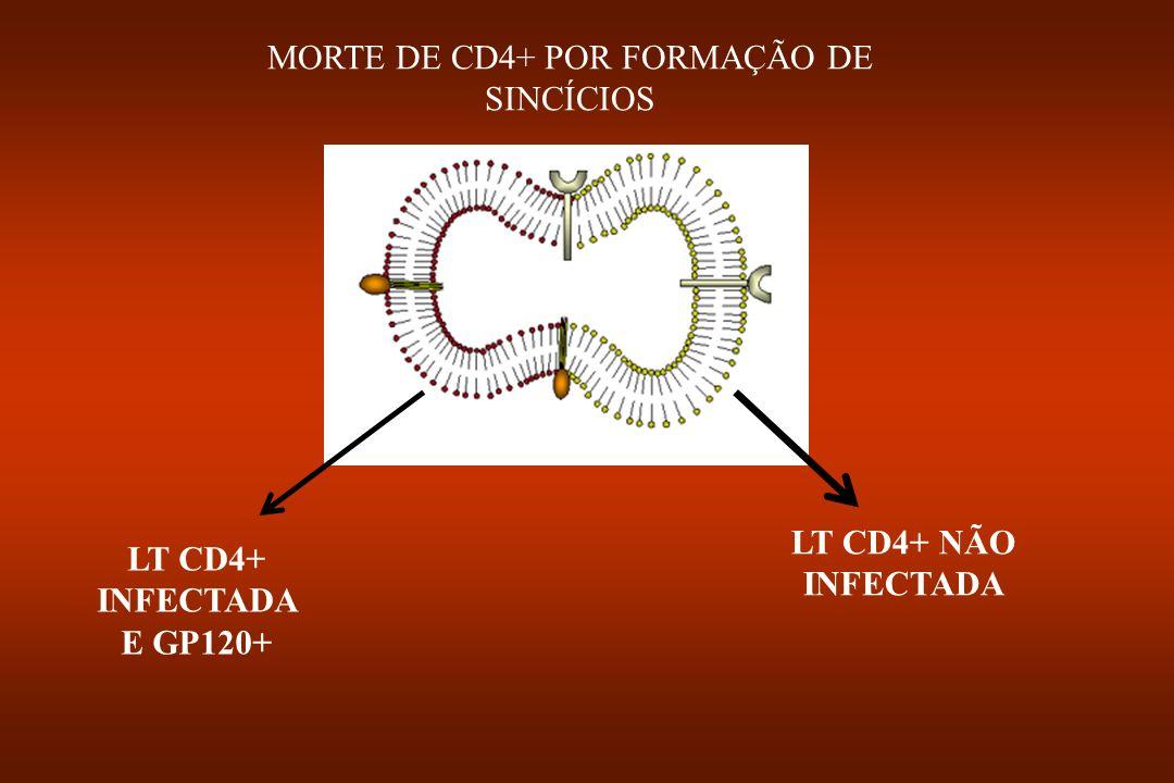 MORTE DE CD4+ POR FORMAÇÃO DE SINCÍCIOS