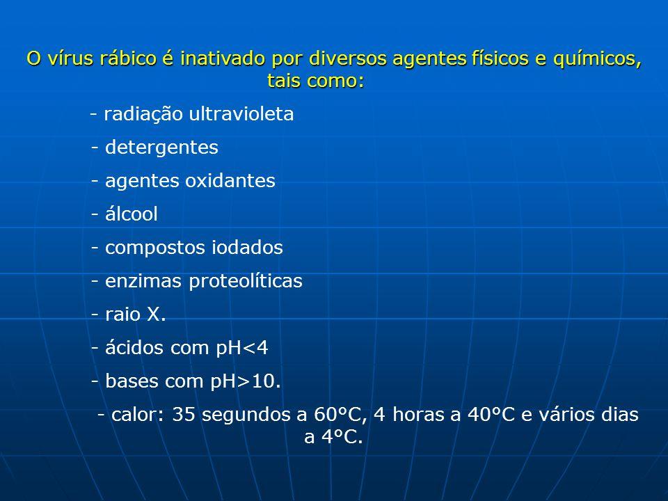 - calor: 35 segundos a 60°C, 4 horas a 40°C e vários dias a 4°C.