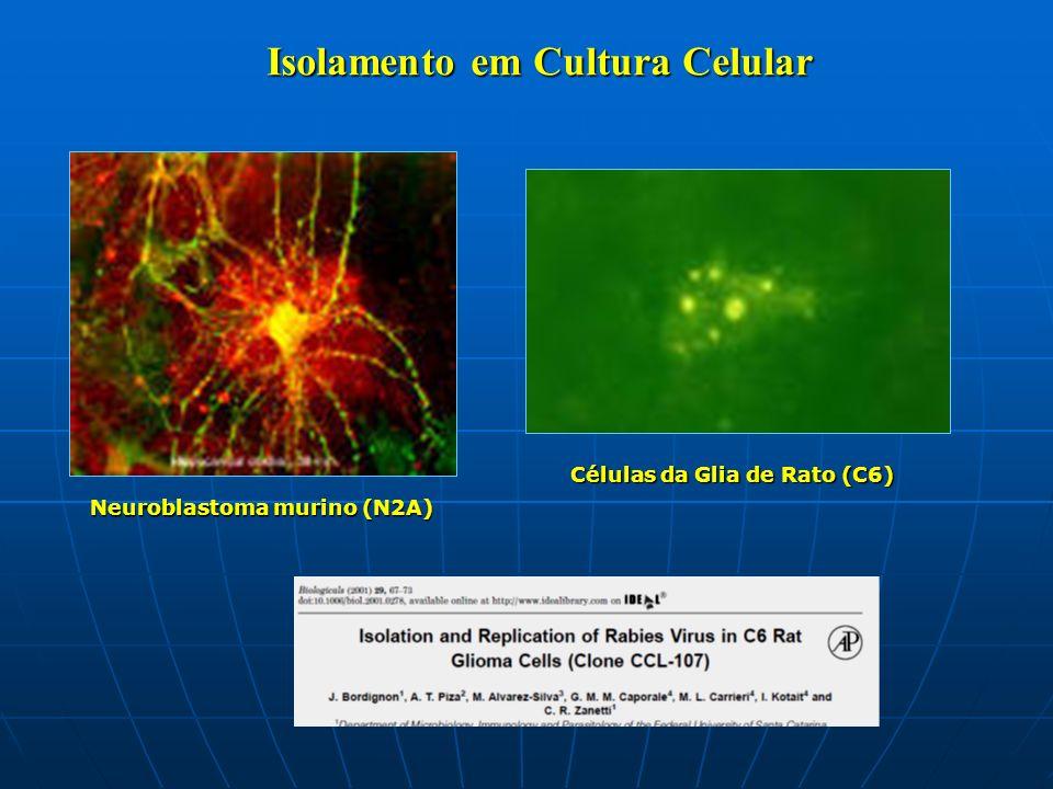 Isolamento em Cultura Celular