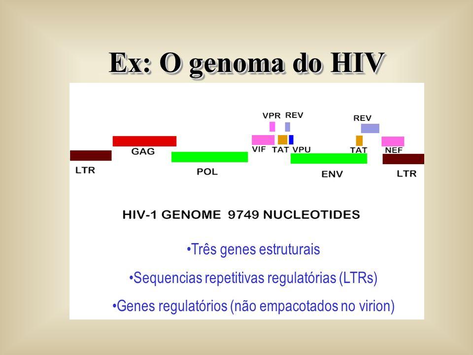 Ex: O genoma do HIV Três genes estruturais
