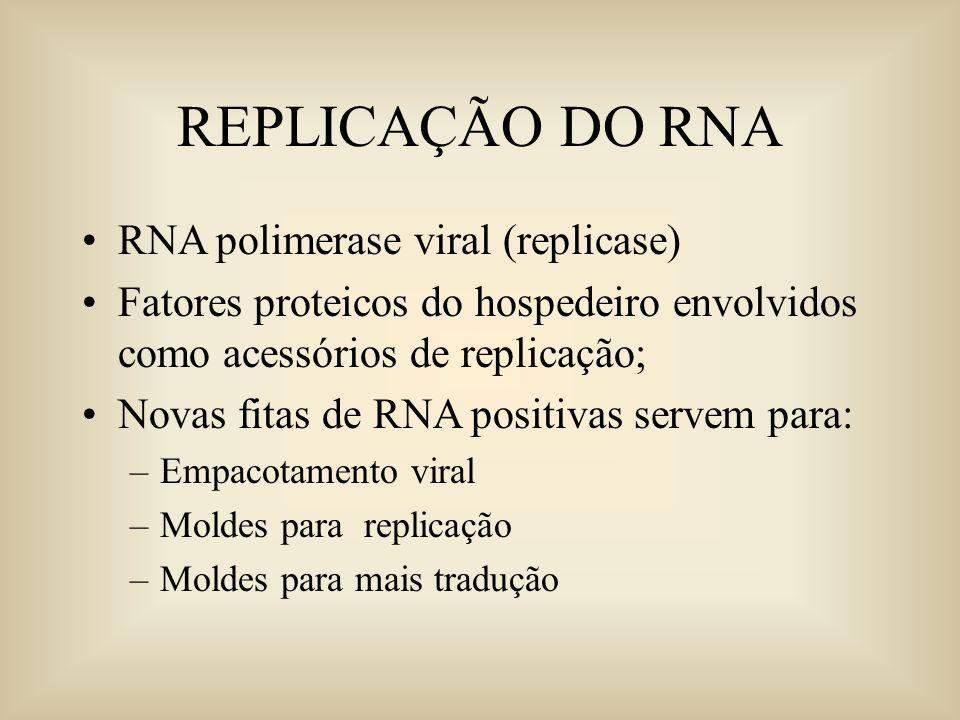 REPLICAÇÃO DO RNA RNA polimerase viral (replicase)