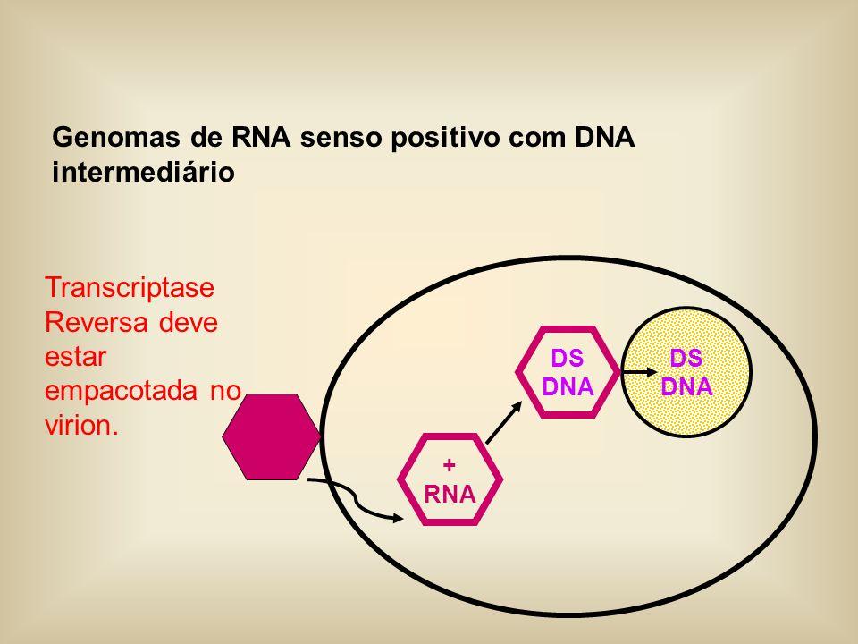 Genomas de RNA senso positivo com DNA intermediário