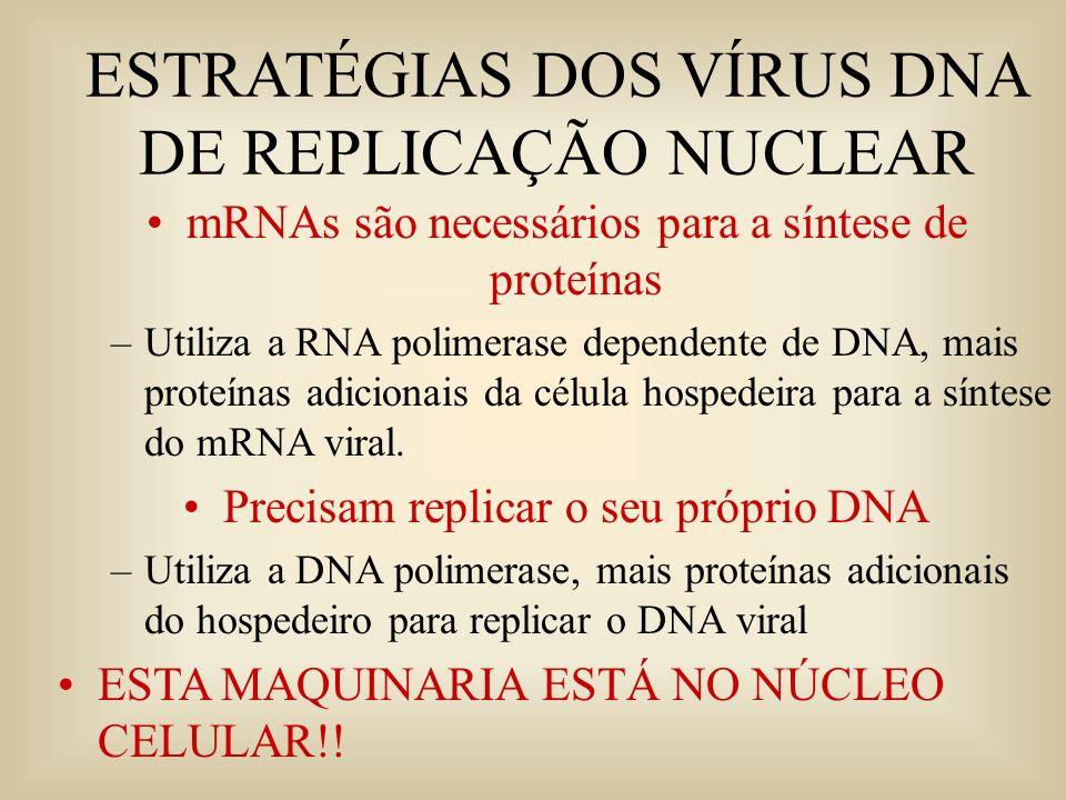 ESTRATÉGIAS DOS VÍRUS DNA DE REPLICAÇÃO NUCLEAR