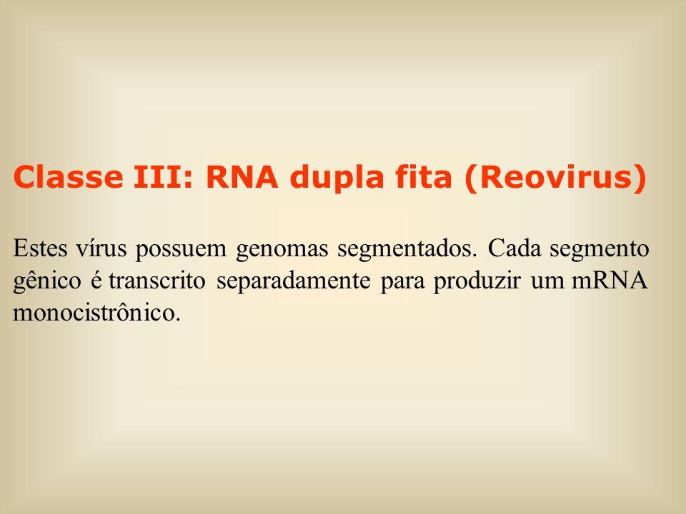 Classe III: RNA dupla fita (Reovirus)
