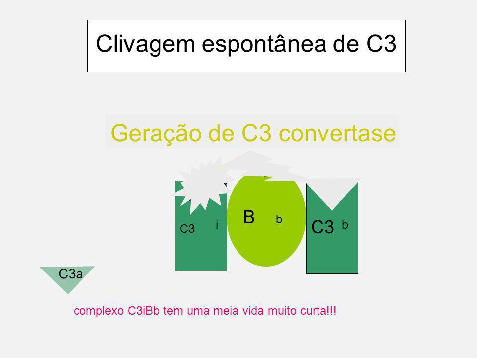 Clivagem espontânea de C3