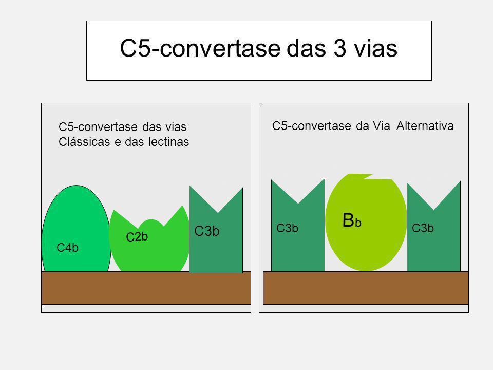 C5-convertase das 3 vias Bb C3b C5-convertase da Via Alternativa