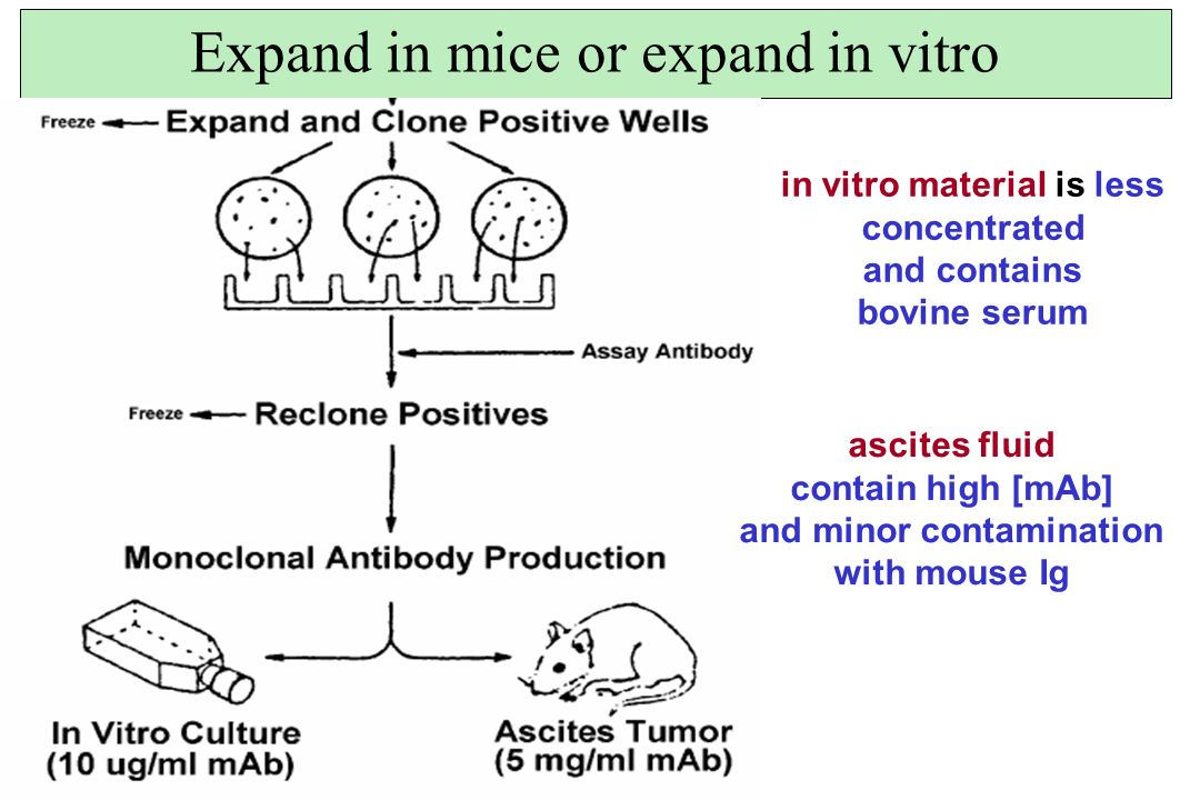 Expand in mice or expand in vitro