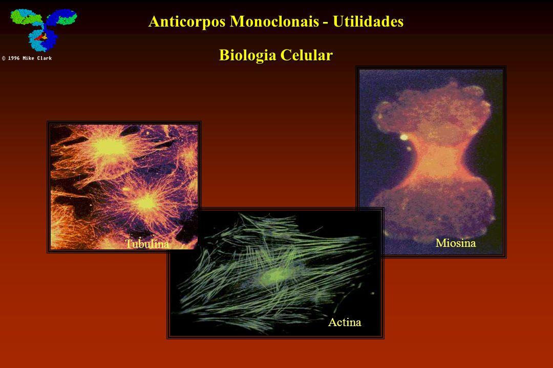 Anticorpos Monoclonais - Utilidades