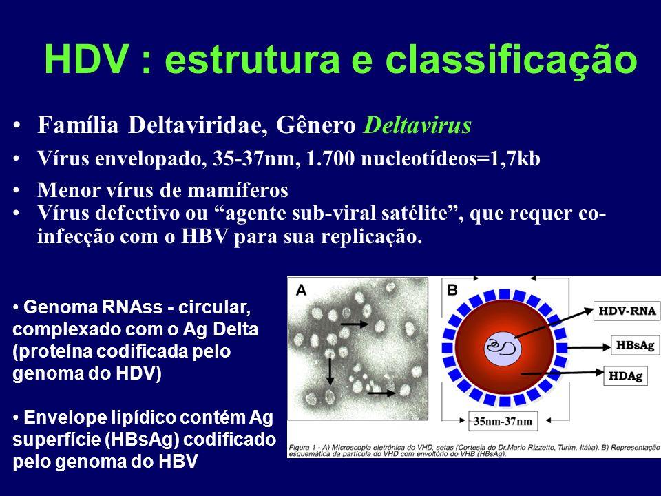 HDV : estrutura e classificação