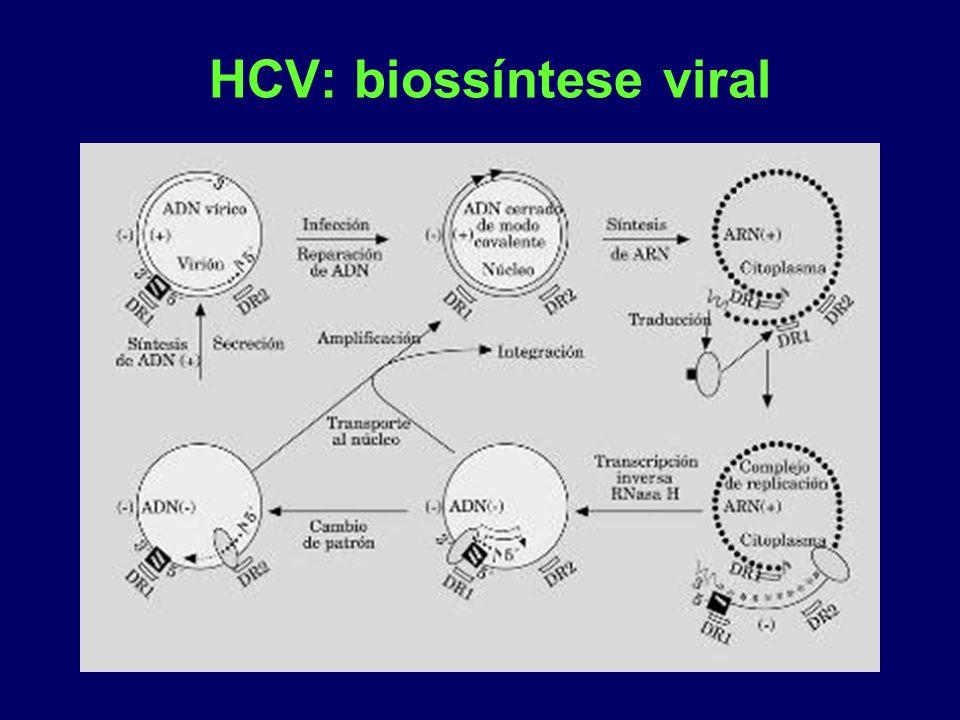 HCV: biossíntese viral