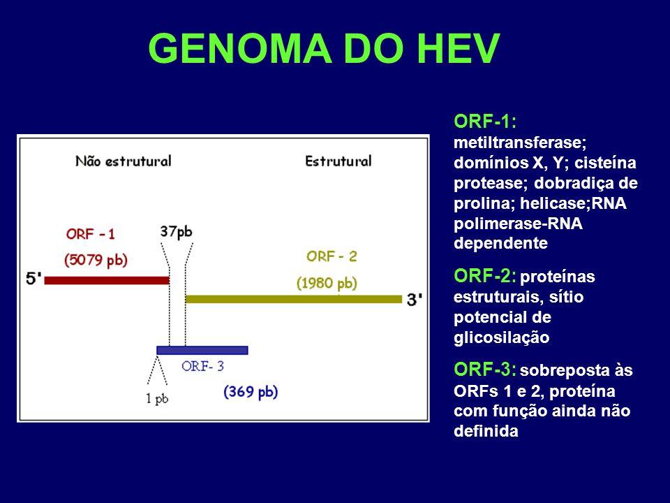 GENOMA DO HEV ORF-1: metiltransferase; domínios X, Y; cisteína protease; dobradiça de prolina; helicase;RNA polimerase-RNA dependente.