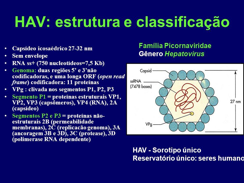 HAV: estrutura e classificação
