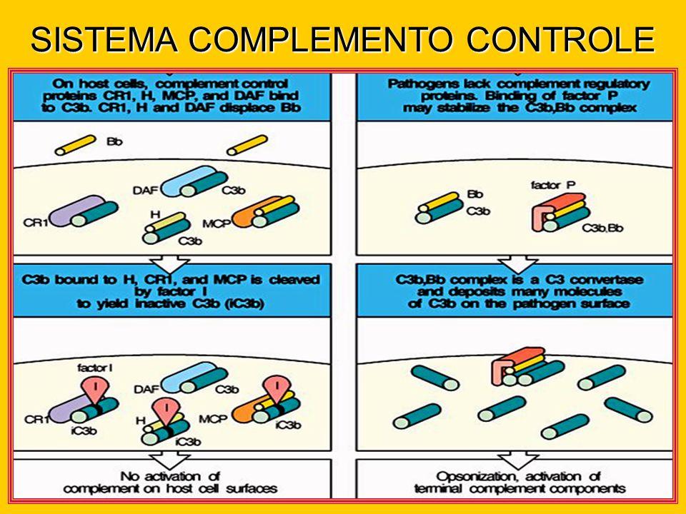 SISTEMA COMPLEMENTO CONTROLE