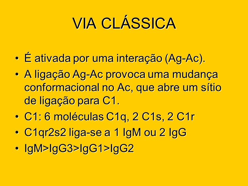 VIA CLÁSSICA É ativada por uma interação (Ag-Ac).